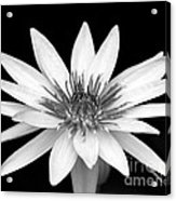 One Black And White Water Lily Acrylic Print