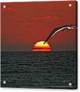 One Black Skimmers At Sunset Acrylic Print