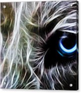 One Eye Acrylic Print