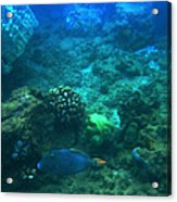 One Fish Blue Fish Acrylic Print