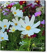 One Flower Stands Out Acrylic Print
