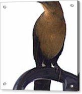 One Foot Bird Acrylic Print by DerekTXFactor Creative