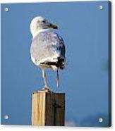 One Foot Seagull Acrylic Print