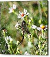 One Giant Spider Acrylic Print