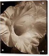 One Gladiola Acrylic Print