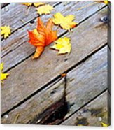 One Golden Leaf Acrylic Print