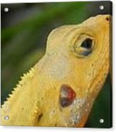 One Happy Lizard Acrylic Print