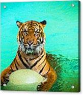 One Kool Cat Acrylic Print
