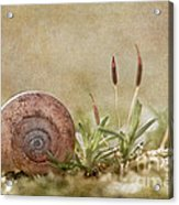 One Moment In Time Acrylic Print