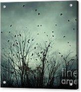 One November Night Acrylic Print by Sharon Coty