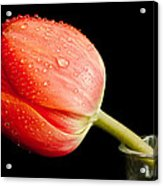 One Of The Simple Things In Life Acrylic Print by Nick  Boren