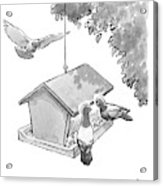 One Pigeon Speaks To Another At A House-shaped Acrylic Print
