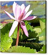 One Pink Water Lily Acrylic Print