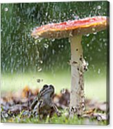 One Rainy Day Acrylic Print by Tim Gainey
