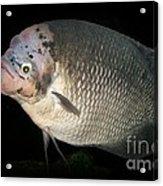 One Strange Fish Acrylic Print