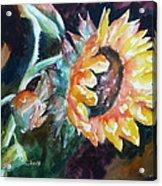 One Sunflower Acrylic Print