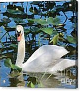 One Swan In The Lilies Acrylic Print
