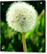 One Thousand Wishes Acrylic Print by Andrea Dale