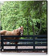 One Very Pretty Hilton Head Island Horse Acrylic Print