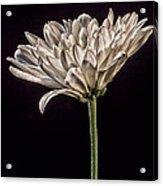 One White Flower Acrylic Print