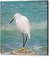 One With Nature - Snowy Egret Acrylic Print