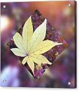 One Yellow Maple Leaf Acrylic Print