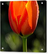 Only For You Acrylic Print by Nick  Boren
