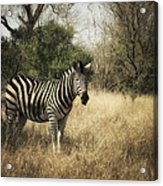 Only One Acrylic Print