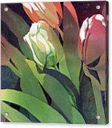 Only Three Tulips Acrylic Print