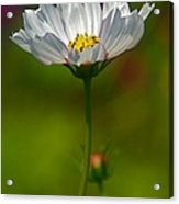 Open For All Acrylic Print