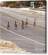 Going To Open House Acrylic Print