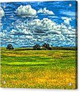 Open Pastures Acrylic Print