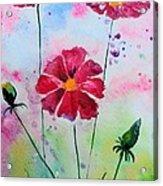 Opera Pink Acrylic Print