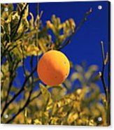 Orange And Blue Sky Acrylic Print