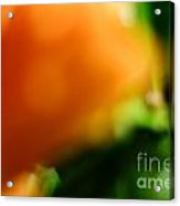 Orange And Green  Acrylic Print by Bobby Mandal