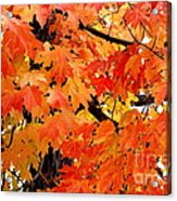 Orange And Reds And Some Yellow Too Acrylic Print