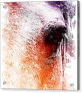 Orange And Violet Abstract Horse Acrylic Print