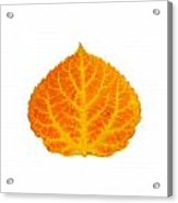 Orange And Yellow Aspen Leaf 3 Acrylic Print