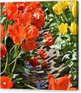 Orange And Yellow Tulips Acrylic Print