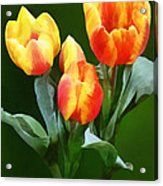 Orange And Yellow Tulips Acrylic Print