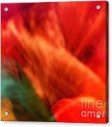 Orange Blossom Opening Acrylic Print