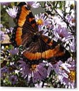 Orange Butterfly/purple Flowers Acrylic Print