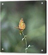 Orange Butterfly V3 Acrylic Print