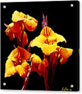 Orange Cannas Acrylic Print