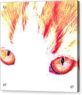 Orange Cat Eyes Acrylic Print