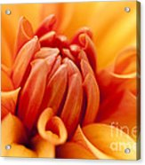 Orange Centre Acrylic Print