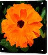 Orange Country Flowers - Impressionist Series Acrylic Print