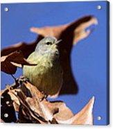 Orange-crowned Warbler - Feather Lite Acrylic Print