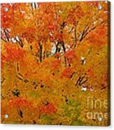 Orange Crush Acrylic Print