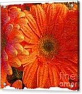 Orange Daisies Painterly With Border Acrylic Print